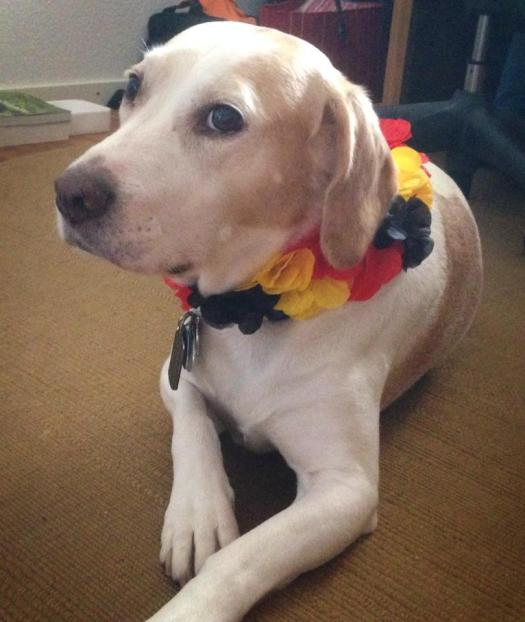 Even Barney got into the German spirit!!