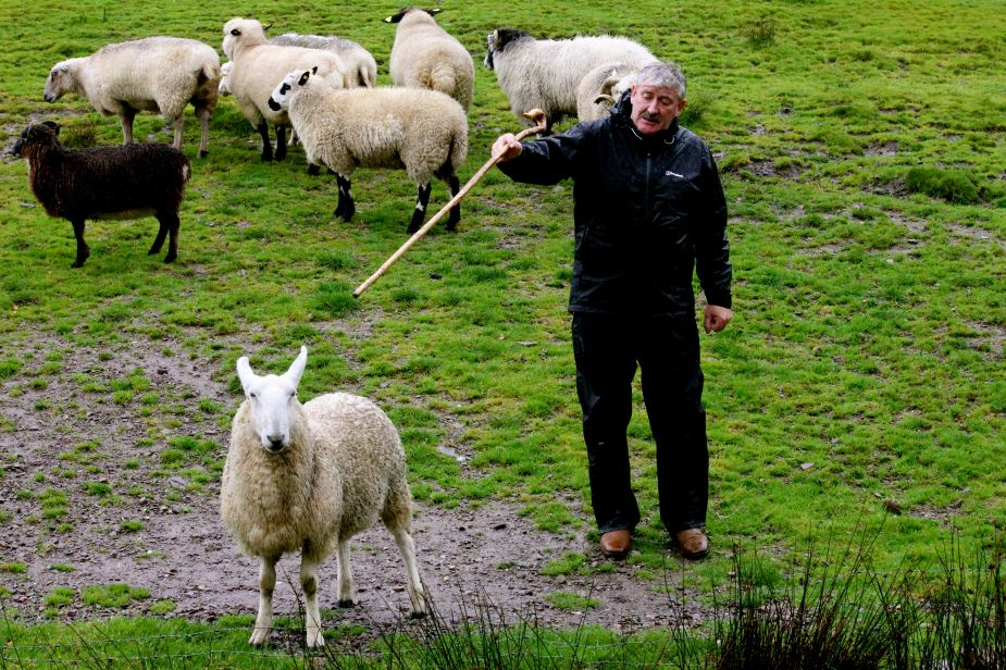 Later in the morning, our tour stopped to watch a local sheep farmer demonstrate how his border collies herd sheep.  The shephard also explained the different breeds of sheep that he has that are found throughout Ireland. And, he talked about how he trains his dogs to herd and how much open land he herds.