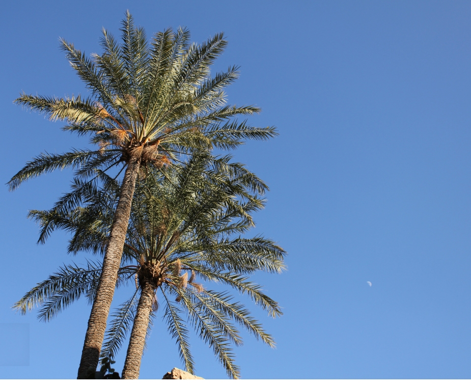 The only trees in Morocco it seems are palm trees.  Here's a shot with the palm trees and the moon.
