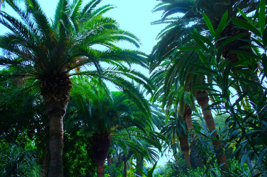 We found a beautfil city park that we explored looking at all of the different plants and palm trees