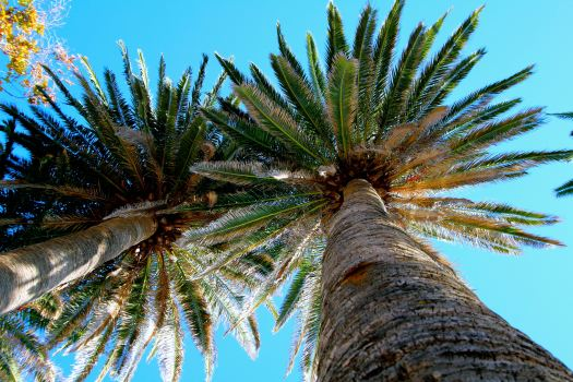 Ahh...the shade of palm trees