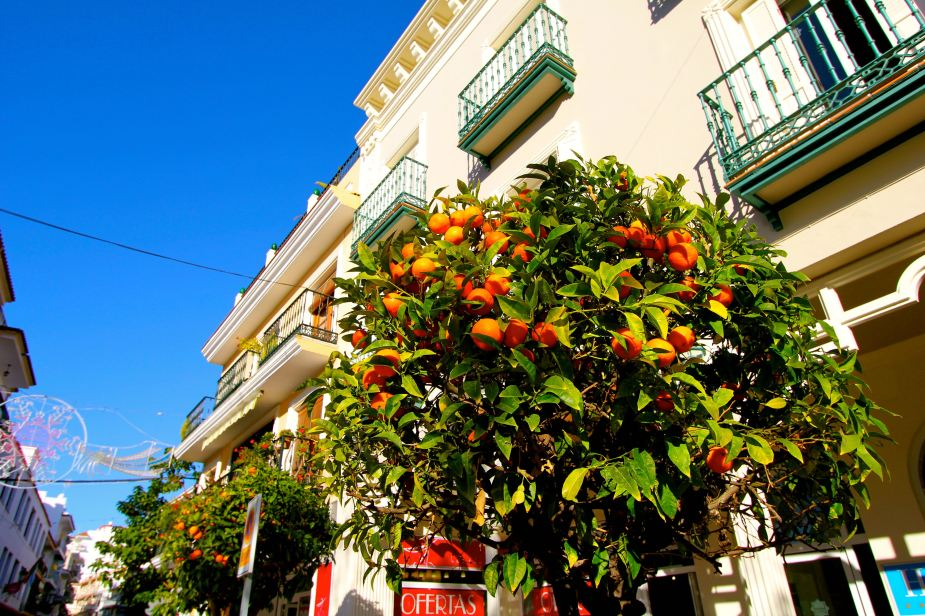 Like everywhere we have been on this trip as well as throughout the Mediterranean....orange trees...and with the blue sky, they really stand out!