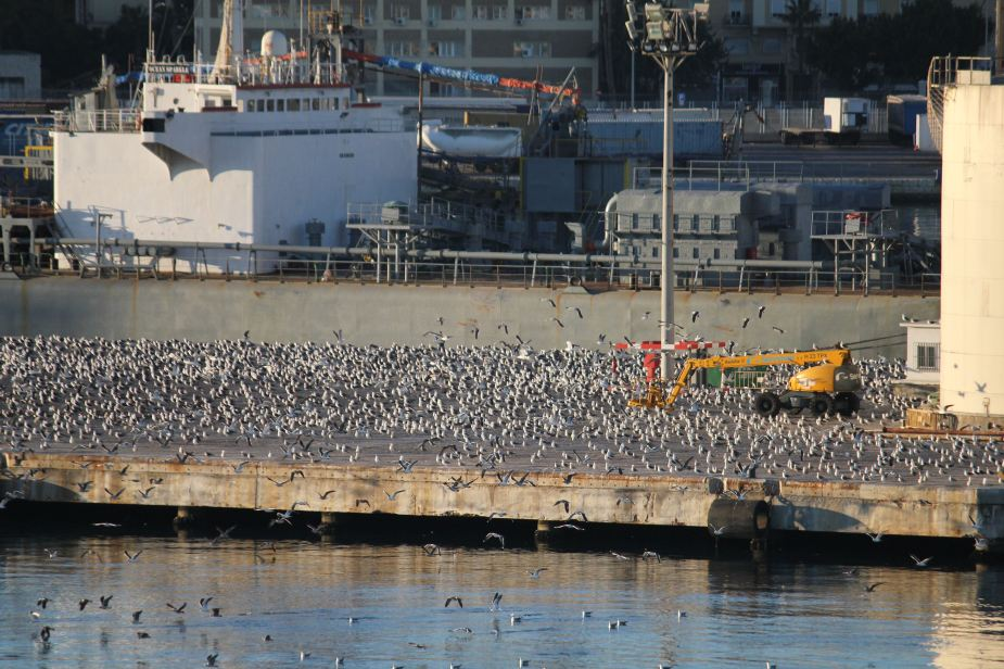 Back in Malaga from our ship.  And, there were just a couple of seagulls to be found?