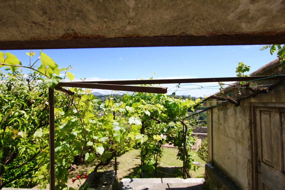 To be self-sufficient, some homes in St. Paul have their very own grape vines for wine making.